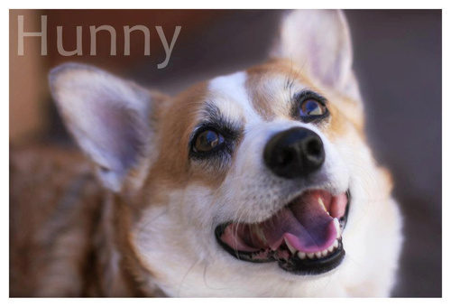 HUNNY_SMILING.png