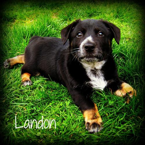 Landon.png