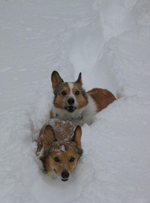 snow_hobbes.jpg