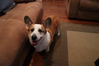 Lakewood_Evee_rehome_and_perso