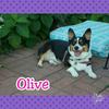 Olive-Smile.png