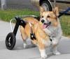 Dugan_cart_small.png